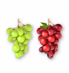 3d realistic bunches of grapes vector image