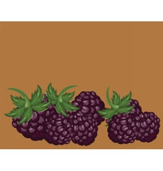 Blackberries delicious background vector image