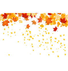 fall leaves isolated vector image