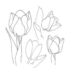 hand drawn set of tulips flowers flower isolated vector image vector image