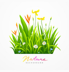 Beautiful variety flowers with green leaves vector