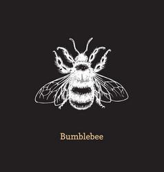 bumblebee on black background vector image