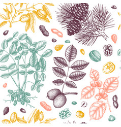 nuts seamless pattern with hand drawn botanical vector image