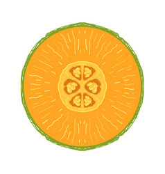 sliced colored sketch style fruit melon vector image