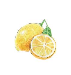 two yellow lemons watercolor vector image