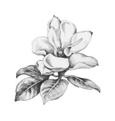Beautiful hand-drawn monochrome flower vector image
