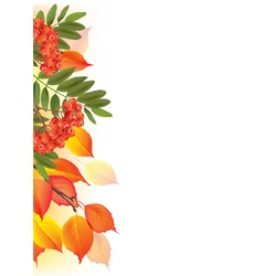 Border of autumn leaves and rowan vector image