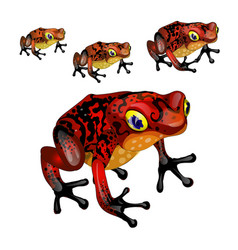 Growth stage of red poisonous frogs isolated vector