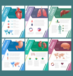 Internal human organs infographic spleen vector