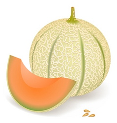 melon vector image