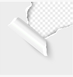 paper torn hole edge realistic vector image
