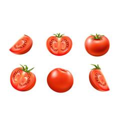 realistic fresh red ripe tomato set vector image