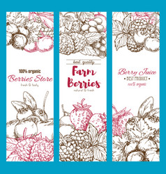 banners of fresh garden berries sketch vector image