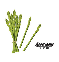 cartoon asparagus ripe green vegetable vector image