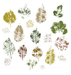 Imprint of different leaves on a white background vector