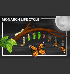 Monarch life cycle diagram vector
