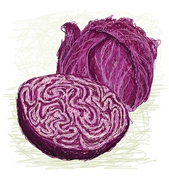 Red cabbage cross section vector
