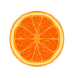 sliced colored sketch style fruit orange vector image