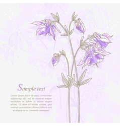 Romantic background with violet aquilegia vector image vector image