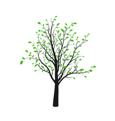 black tree silhouette with green leaves isolated vector image