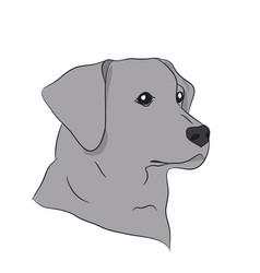 dog portrait profile look vector image