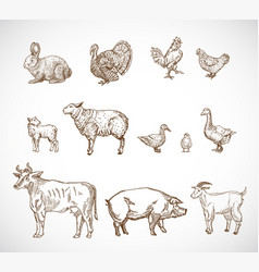 Hand drawn domestic animals set a collection of vector