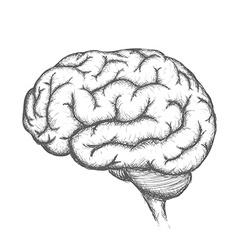 Human brain Stock vector