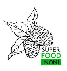 Icon superfood noni vector
