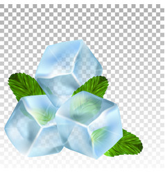 realistic ice cubes and mint leaves vector image