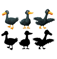 set black duck on white background vector image