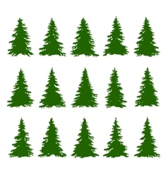 Conifer Trees Set on the white background for vector image vector image