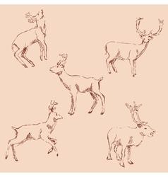 Deer sketch Pencil drawing by hand Vintage vector image