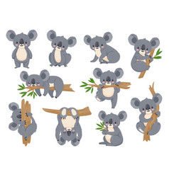 Cute cartoon koala lazy koalas with eucalyptus vector