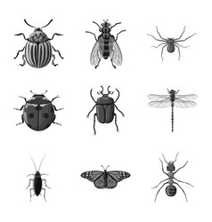 design insect and fly symbol set of vector image