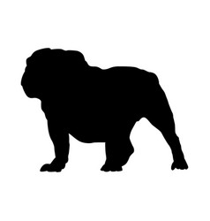 English bulldog dog silhouette vector