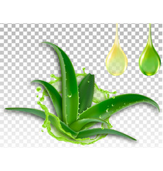 realistic aloe vera splash and a drop of juice vector image