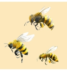 Watercolor hand drawn bees vector