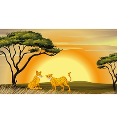 a leopard under tree vector image