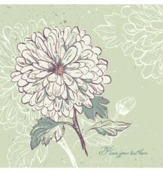 blooming chrysanthemum vector image vector image