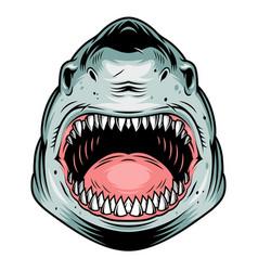 Colorful aggressive shark head concept vector