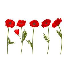 Red poppy flowers on stems set botanical vector