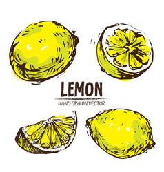 digital detailed color lemon hand drawn vector image vector image