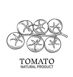 hand drawn tomato icon vector image vector image