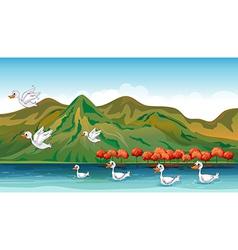 Ducks in quest of food vector
