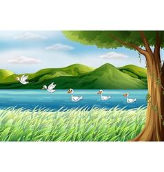 Flying pond ducks vector