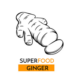 icon superfood ginger vector image