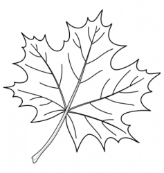 Leaf a maple contour vector
