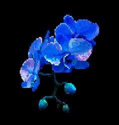 navy blue meadow flowers pixel art vector image