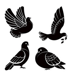 Pigeon or dove white bird flying with spread vector