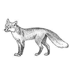Red fox wild animal symbol of the north vector
